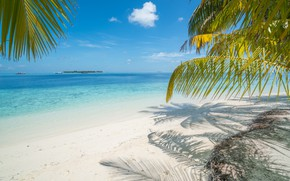 Picture sand, sea, wave, beach, summer, the sun, palm trees, summer, beach, sea, sand, paradise, palms, …