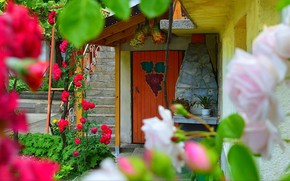 Picture Flowers, House, The door, Yard