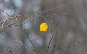 Picture autumn, nature, sheet, branch