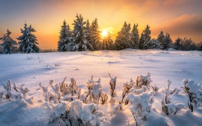 Picture winter, snow, sunset