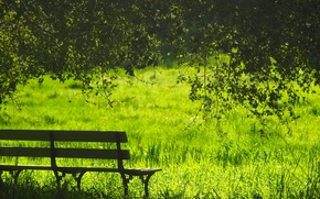 Picture greens, summer, grass, the sun, trees, bench, branches, glade, foliage