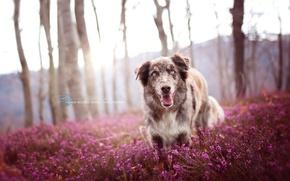 Wallpaper nature, each, dog