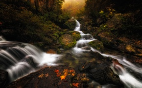 Picture autumn, forest, leaves, trees, river, stream, Italy, Piedmont, Certosa