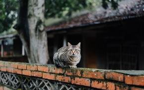 Picture cat, cat, looks, striped