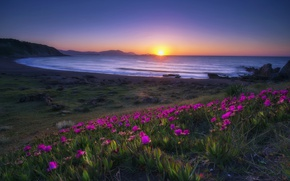 Picture sea, sunset, flowers, shore