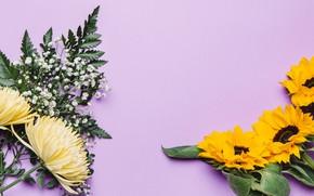 Picture flowers, sunflower, chrysanthemum