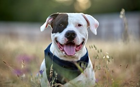 Picture language, face, dog, funny, breed