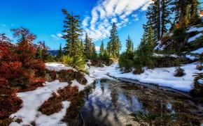 Picture snow, trees, lake, Washington, Washington State, Alpine Lakes Wilderness, Snow Lake, Snow Lake, Snoqualmie Pass