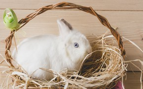 Picture rabbit, hay, Basket