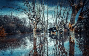 Picture trees, nature, house