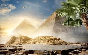 Wallpaper the sky, the sun, clouds, Palma, stones, bird, desert, photoshop, Egypt, pyramid, camels, Cairo