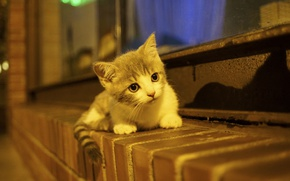 Picture baby, kitty, on the windowsill