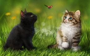 Wallpaper grass, kittens, ladybug, animals