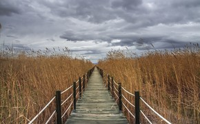 Wallpaper bridge, the sky, reed
