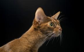 Picture cat, cat, background