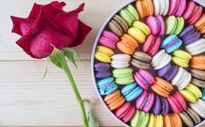 Wallpaper candy, flover, box, color, macaron, rose, flower, dessert, box