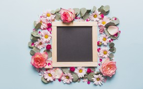 Picture Flowers, Roses, Board, Chrysanthemum
