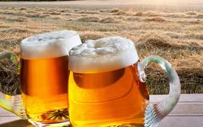Picture field, foam, the sun, trees, landscape, dawn, beer, straw, mugs, bokeh