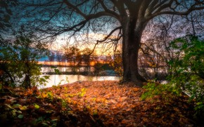 Picture autumn, river, tree