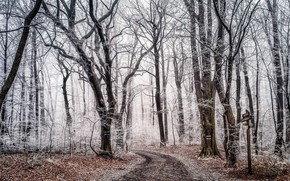 Wallpaper fabulous, magic forest, forest, beautiful, frozen, frost, winter, nature, fairy, photo forest, winter magic, magic.