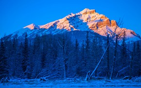 Picture winter, trees, mountains, Canada, Albert