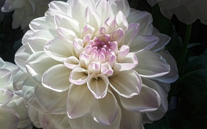 Wallpaper white, macro, flowers