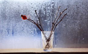 Picture drops, branches, background, window, glass