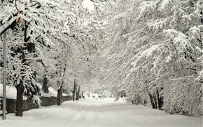 Picture Winter, Road, Trees, Snow, Street, Frost, Winter, Frost, Snow, Street, Road, Trees