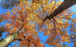 Picture autumn, the sky, leaves, trees, branches, trunk