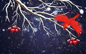 Wallpaper Winter, Minimalism, Bird, Snow, Branch, Snowflakes, Background, Rowan, Holiday