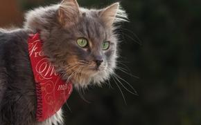 Picture cat, cat, look, background, portrait, bandana