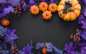 Wallpaper purple, Halloween, pumpkin, Halloween, berries, pumpkin