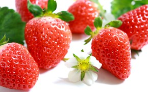 Picture flower, Strawberry, berry