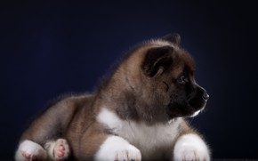 Picture background, Puppy, Baby