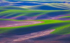 Picture field, grass, hills, USA, Washington
