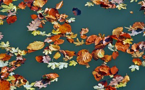 Wallpaper leaves, autumn, water