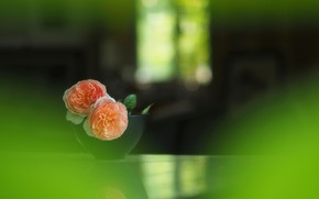 Picture blur, vase, wallpaper, buds, tea rose, bokeh
