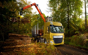 Picture autumn, forest, trees, yellow, foliage, the truck, download, DAF, tractor, DAF, 2016, the trailer, crane, …