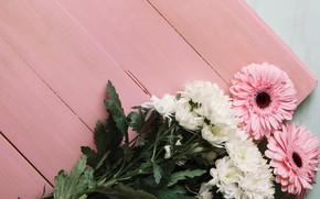 Picture flowers, pink, white, chrysanthemum, wood, flowers, spring, gerbera
