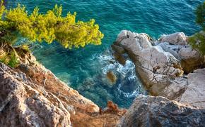 Picture Nature, Sea, Tree, Open, Rocks, Wave
