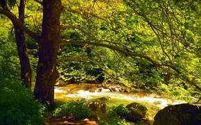 Picture Stream, Spring, Trees, Forest, Nature, River, Spring, River, Forest, Trees, Flow