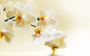 Picture flowers, branch, Orchid