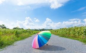 Picture road, summer, Park, rainbow, umbrella, colorful, rainbow, summer, umbrella