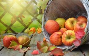 Wallpaper apples, basket, physalis, fruit, Board, leaves, branches, fruit