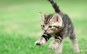 Picture kitty, baby, lawn