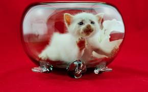 Picture glass, kitty, aquarium, baby