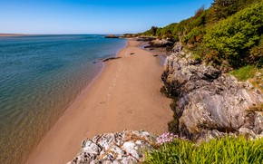 Picture sea, greens, the sky, grass, flowers, stones, coast, horizon, UK, the bushes, Wales, pesoe, Porthmadog