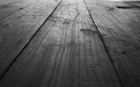 Picture tree, floor, black and white