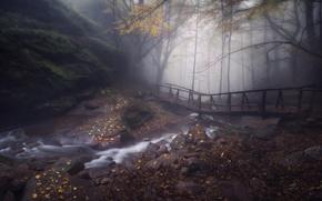 Picture autumn, forest, trees, nature, stones, rocks, foliage, haze