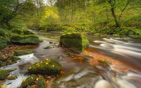 Picture autumn, forest, river, stones, England, moss, England, Cumbria, Cumbria, River Lin, River Lyne
